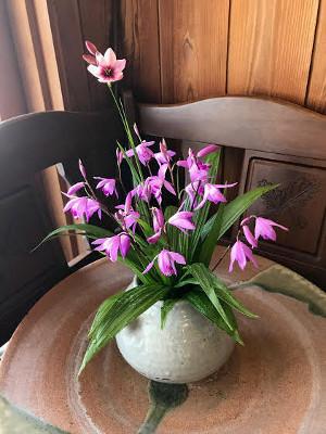 庭の花・シラン