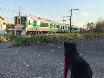 愛知環状鉄道とシャリ