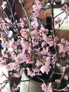 桜・満開!