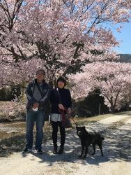 名倉川沿いの桜並木・設楽