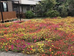 実家の庭は、お花畑