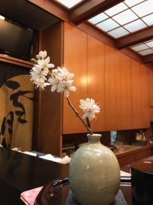 我が家の桜(サクランボ)