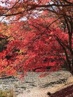 タカドヤ湿地の紅葉