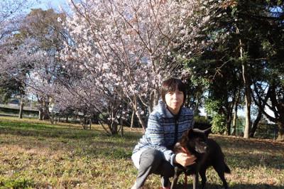 四季桜とシャリ