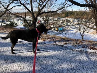 雪の日・シャリ