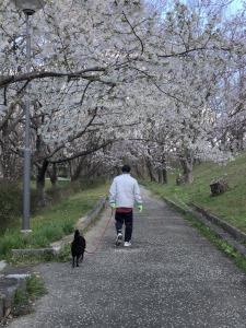 柳川瀬公園散歩