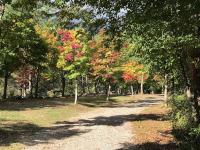 紅葉が少し始まっています!(南信州・駒ヶ根)
