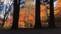 光前寺の紅葉(長野県)