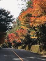 もみじ街道(豊田市下山)