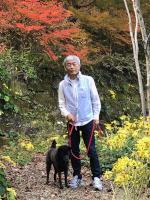 ツワブキの花と紅葉(松平郷)
