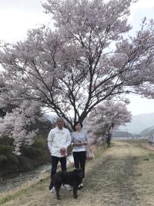 名倉川・清水のコヒガンザクラ並木